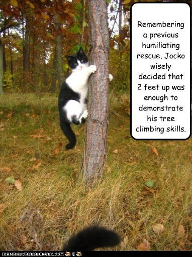 Remembering a previous humiliating rescue, Jocko wisely decided that 2 feet up was enough to demonstrate his tree climbing skills.