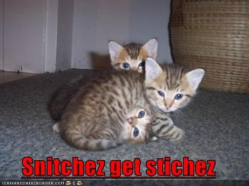 Cheezburger Image 3641575936