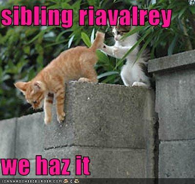 cute fighting kitten siblings - 3641599232