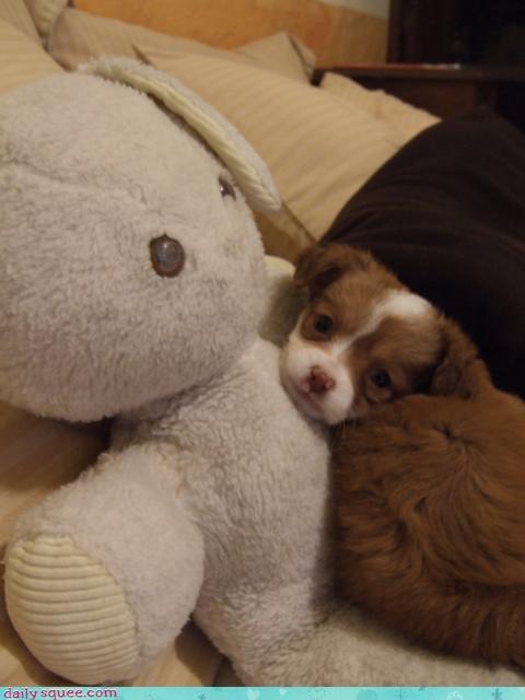 bunny,doll,puppy