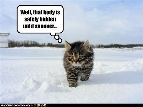 cute kitten murder plotting snow - 3642094848