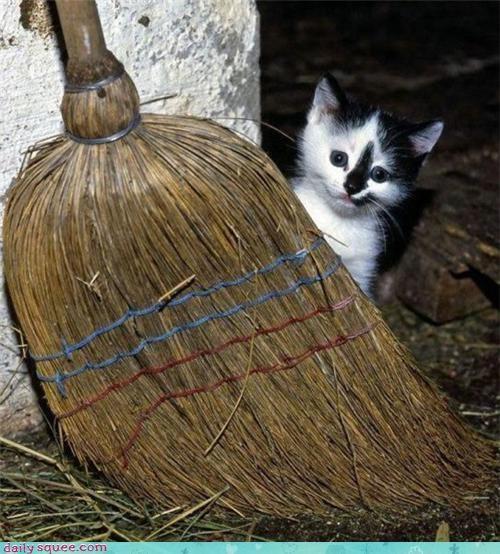face kitten nerd jokes - 3642571008