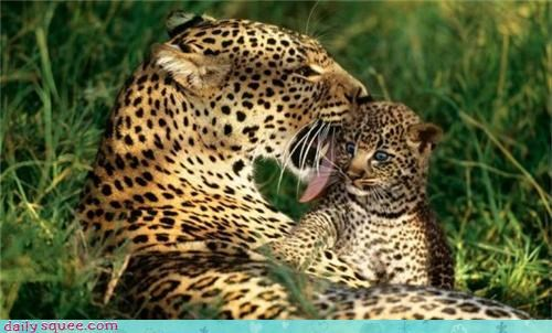baby cub little big cats - 3642572800