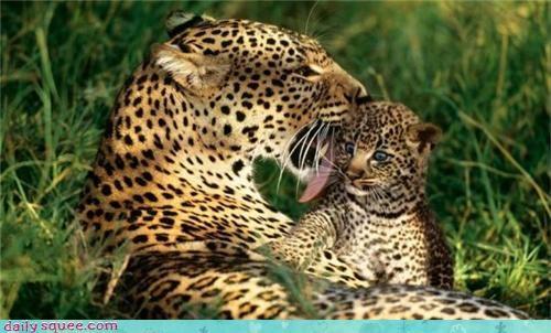 baby cub little big cats - 3642572800