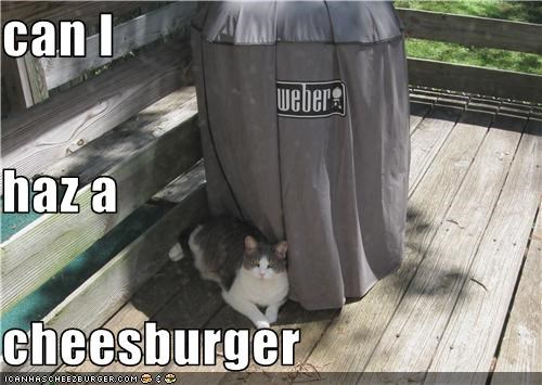 Cheezburger Image 3643175936