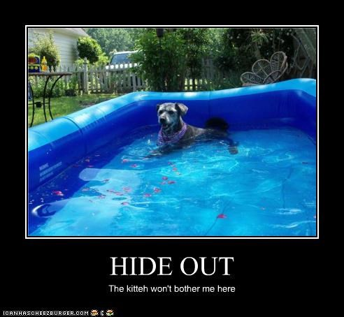 hiding lolcat pool water whatbreed - 3643576832