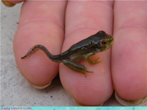 frog nerd jokes tadpole - 3643586048
