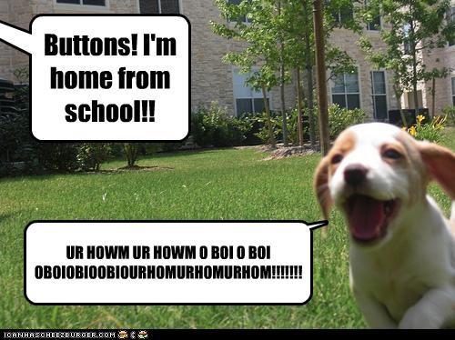 Buttons! I'm home from school!! UR HOWM UR HOWM O BOI O BOI OBOIOBIOOBIOURHOMURHOMURHOM!!!!!!!