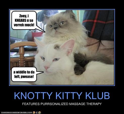 Knotty Kitty Klub Cheezburger Funny Memes Funny Pictures