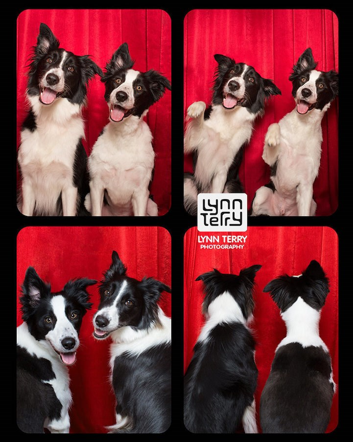 adorable dogs in photo booths