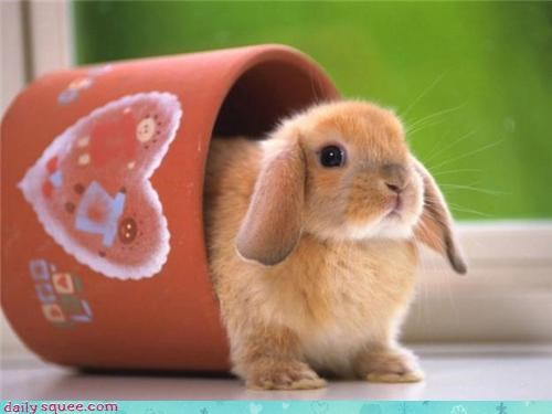 boopable bunny squee spree - 3645428992