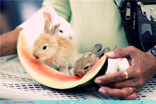 bunny noms squee spree - 3645818624