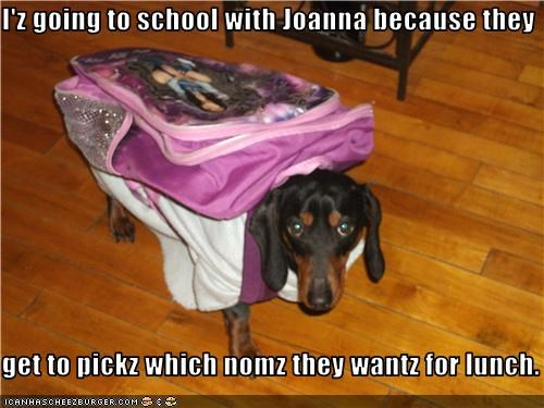 backpack,dachshund,lunch,nom,school
