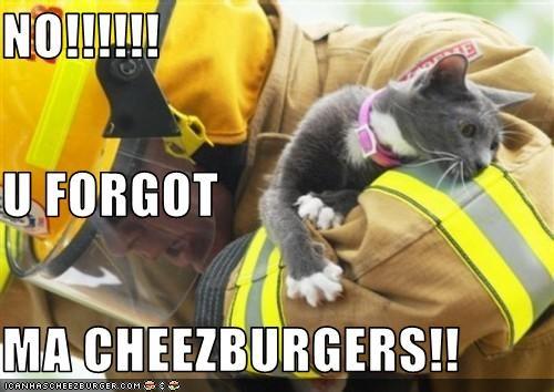Cheezburger Image 3646221568