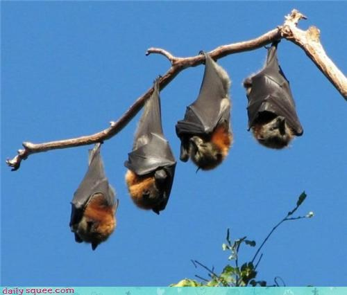 bat,nap,wings
