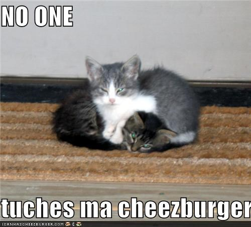 Cheezburger Image 3648040192