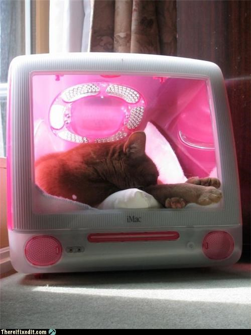 cat computer mac mod nap recycling-is-good-right - 3648110848