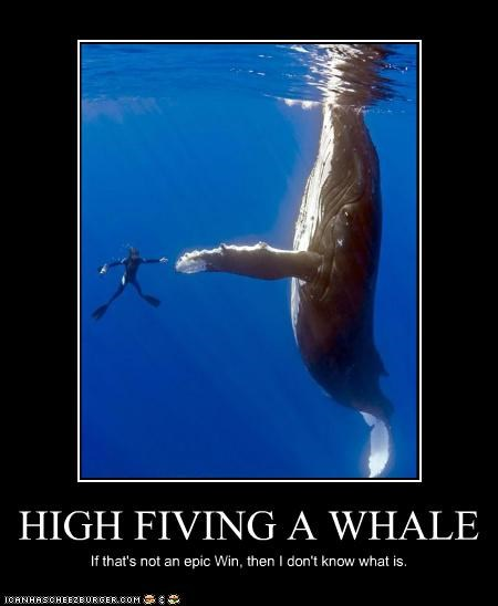 HIGH FIVING A WHALE If that's not an epic Win, then I don't know what is.