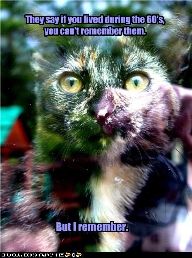 adage but cant caption captioned cat colors drugs living psychedelic remember saying - 3648531712