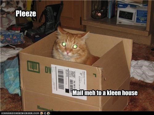 box,caption,cat,clean house,mail