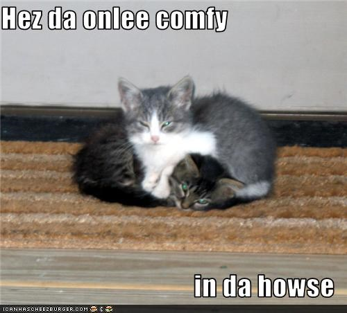caption cat comfy kitten only one - 3649010176