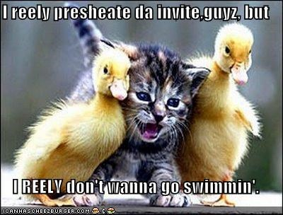caption,cute,do not want,kitten,lolducks,swimming,water