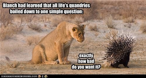 caption lollions lolporcupines rules want - 3649311744