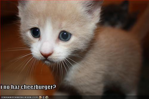 Cheezburger Image 3650935552