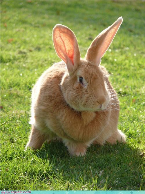 bunny cute ears - 3651170304