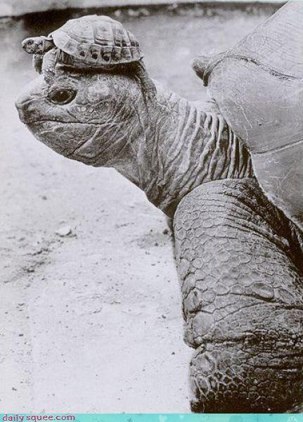 hat tiny turtle - 3651310080