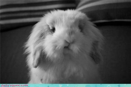 bunny fluff Fluffy Friday - 3651310336