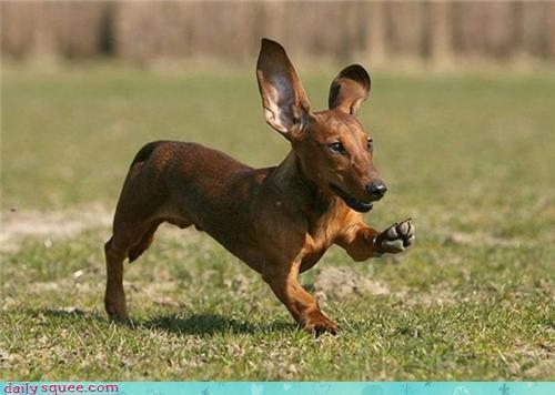 cute ears nerd jokes - 3651311360
