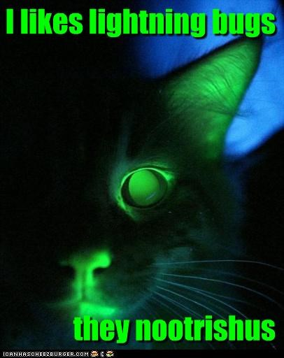 caption,captioned,cat,do want,glowing,kitten,light,lightning bug,likes,nutritious