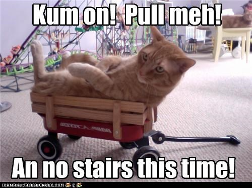 caption,captioned,cat,caveat,come on,Command,me,no,pull,ride,riding,stairs,tabby,this,time,wagon