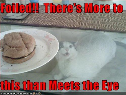 Cheezburger Image 3652405248