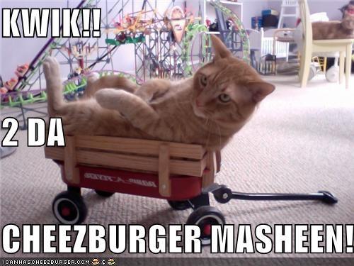 Cheezburger Image 3653704192