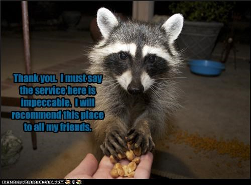 caption fud lolraccoons nom nom nom want - 3653818624