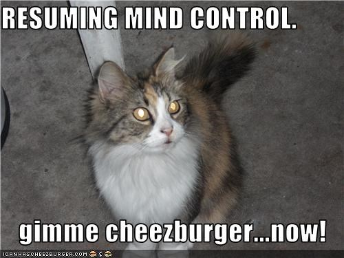 Cheezburger Image 3654200064