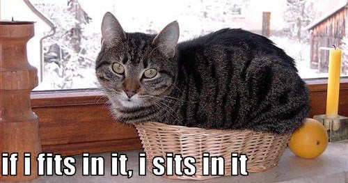 List of LOLcat cat memes to celebrate the 5th anniversary of If It Fits, I sits cat memes.