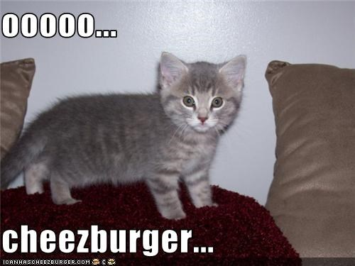 Cheezburger Image 3655689216