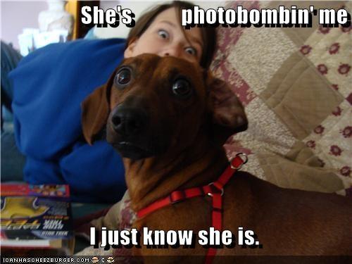 dachshund human meta photobomb picture - 3655892224