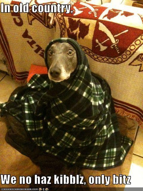 bits blanket greyhound noms none - 3656889856
