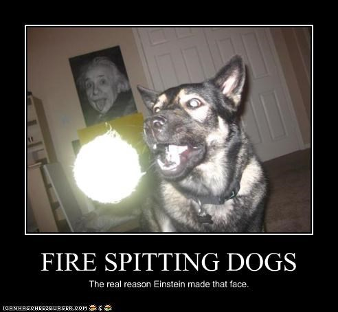 FIRE SPITTING DOGS The real reason Einstein made that face.