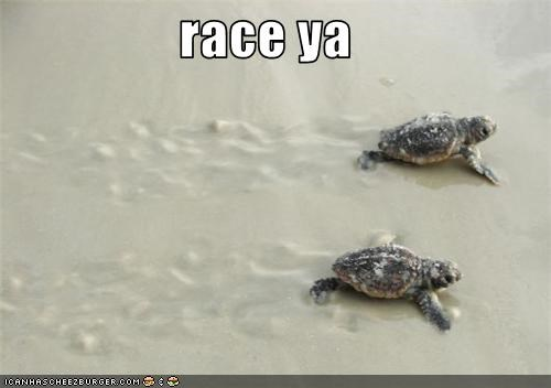 beach cute lolturtles racing - 3659679232