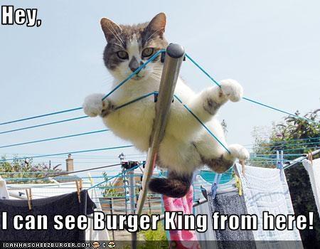 Cheezburger Image 3659796480
