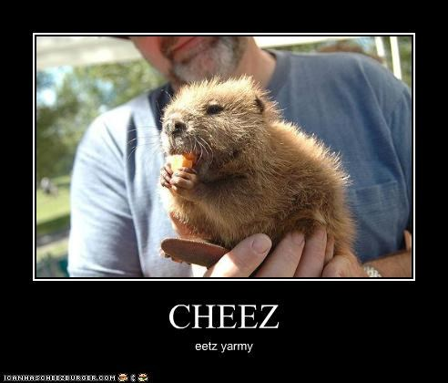 Cheezburger Image 3660972032