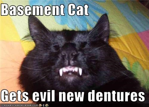 Basement Cat  Gets evil new dentures