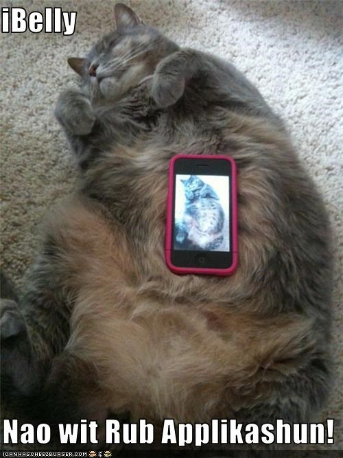 apple application belly caption cat iBelly iphone - 3661354240