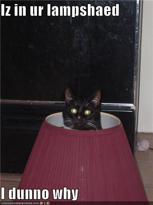 confused,lamp