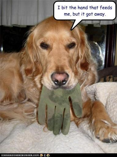 bite drool glove golden retriever hand